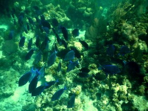 The beauty of the coral reef on Lighthouse Reef Atoll is unsurpassed.