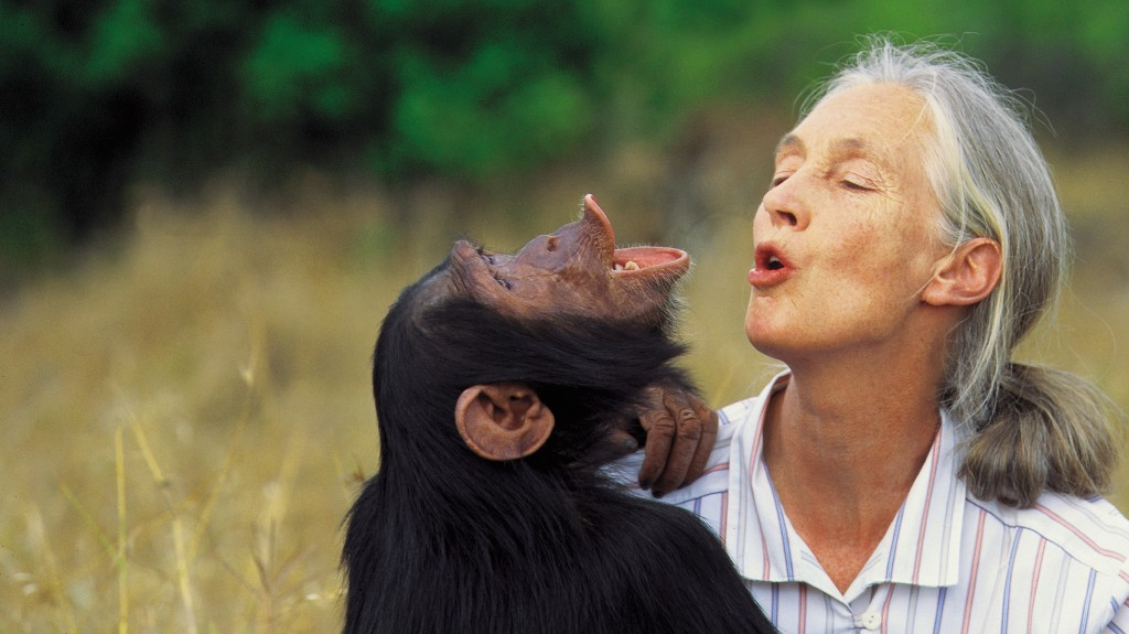 Mongabay founder Rhett Butler interviews primate legend Jane Goodall for the site's podcast. I am included as well, offering insights from COP23. Pretty good company.